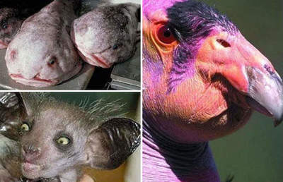 Most bizarre and ugly animals