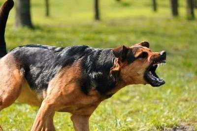 Dvineshsya - break: how to escape from an aggressive dog